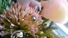 Śliczny Złoty Pierścionek 18K - Unikatowy Doskonały Naturalny Szafir z Efektem Aleksandrytu - Certyfikat nr.276_1108 (2)